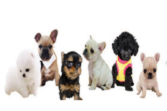 Browse All puppies For Sale
