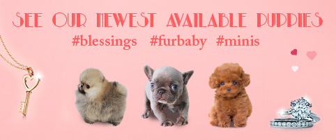 See our Newest Puppies