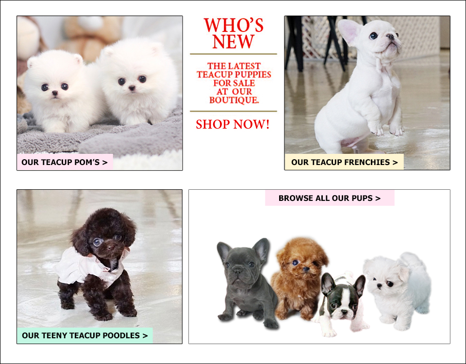 New Pups for sale. Discover What is new