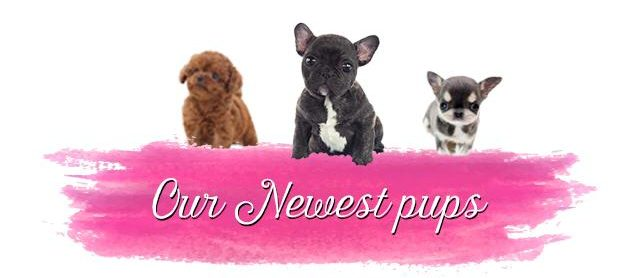 Check our newest Puppies
